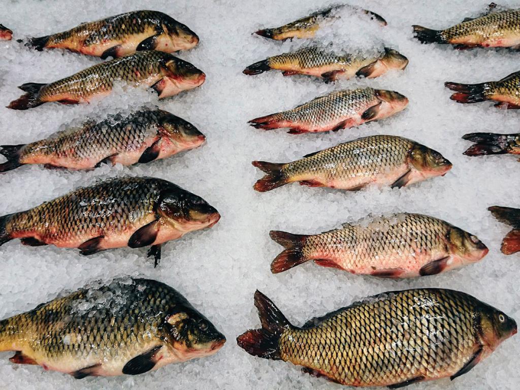 Охлажденная рыба на прилавке